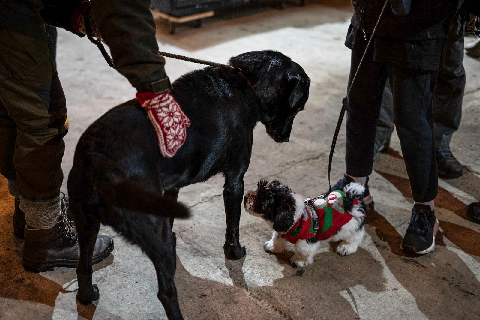 Traditionen tro: Julens hyggeligste marked på Brandbygegaard