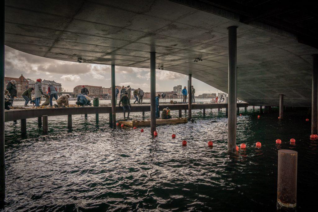 Nyt i Aarhus: Få jeres egen havhave på Marselisborg Lystbådehavn