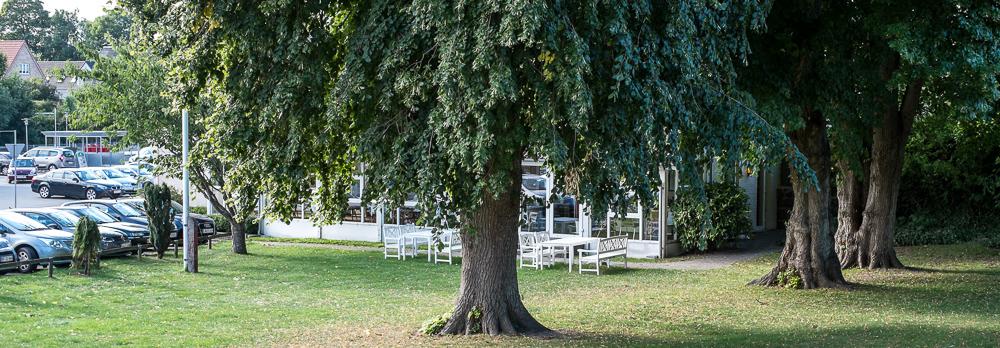 De gamle træer ved Malling Kro