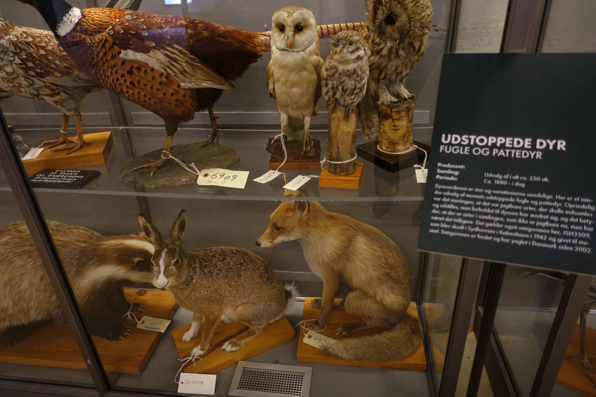 Reportage: Skønne naturoplevelser hos Det Grønne Museum på Djursland