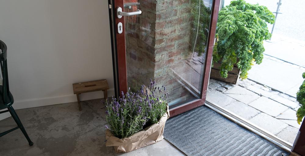 En indgang med økologisk grønkål på Restaurant Pondus i Aarhus