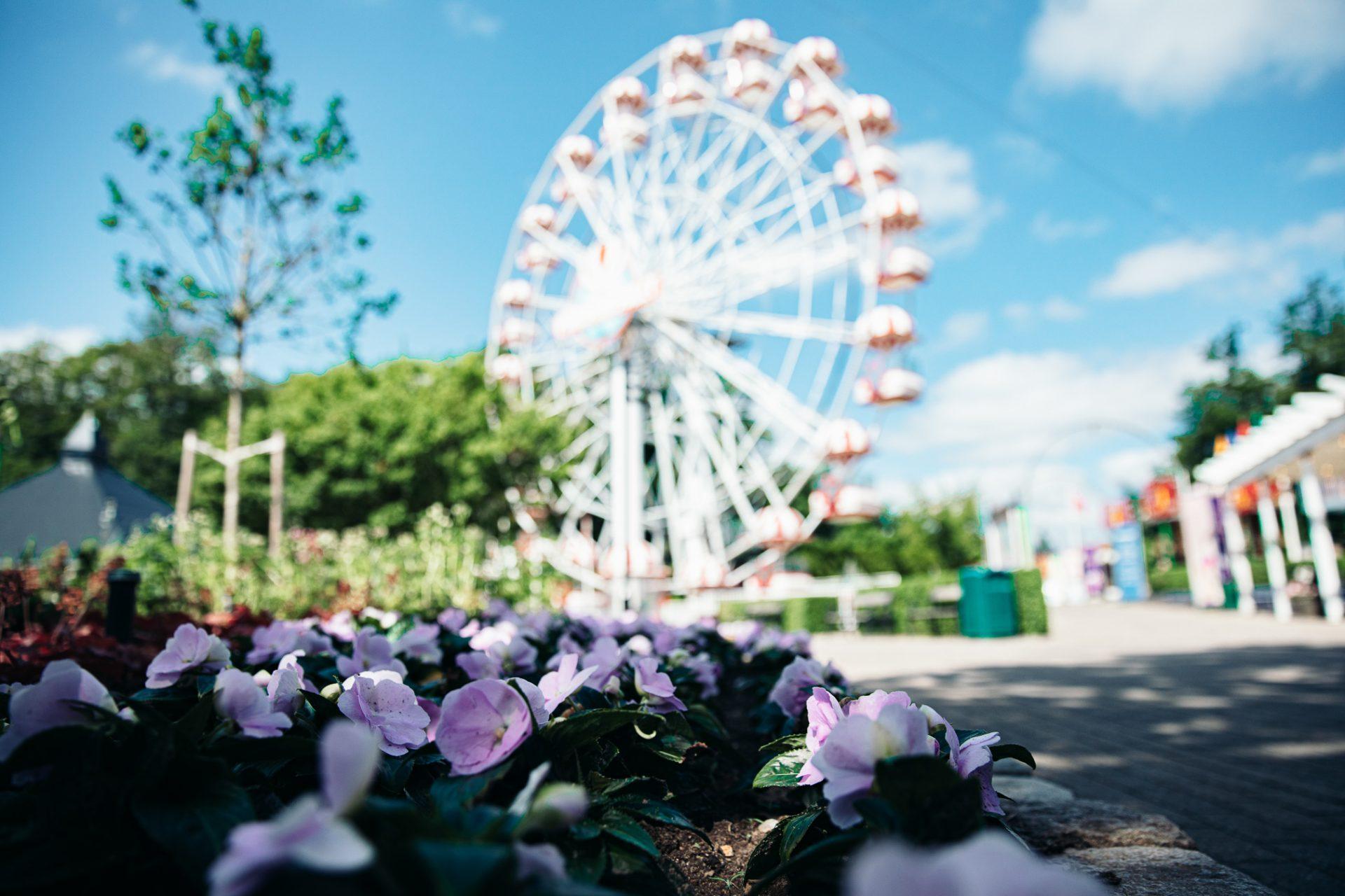 Tivoli Frihedens Blomsterfestival er en publikumssucces: Forlænger til resten af skoleferien