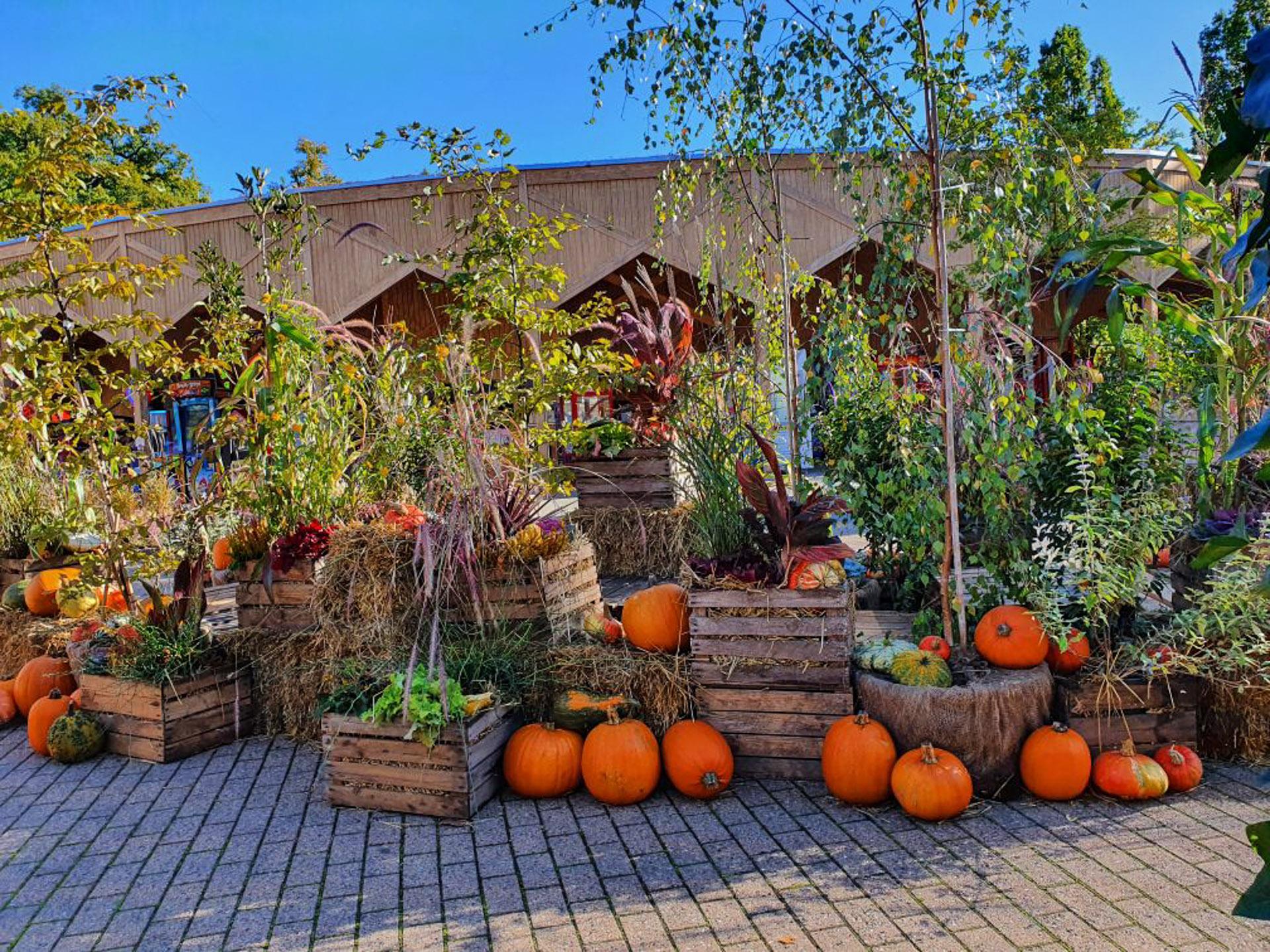 Halloween i Friheden: Græskar og hygge i den smukke gamle have