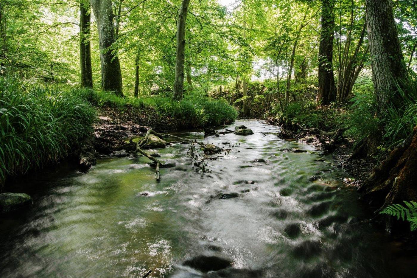 10 unikke naturområder: Oplev naturperler, der er udvalgt til Aarhus' Naturkanon