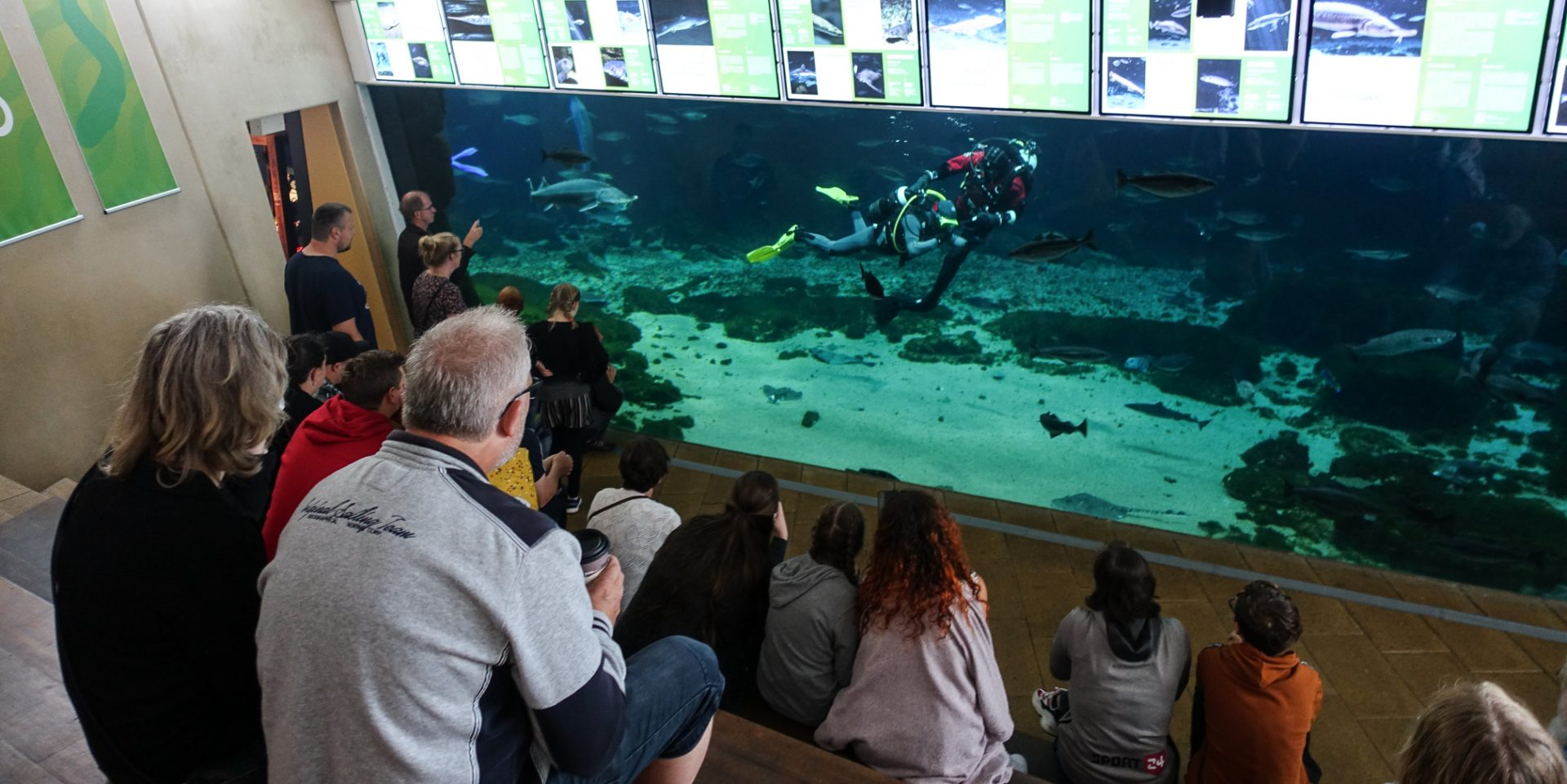 Reportage: HAJ-five til Kattegatcentret i Grenaa