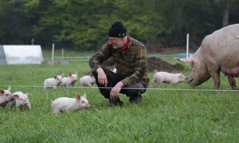 Lars Korsgaard med sine øko-grise under åben himmel