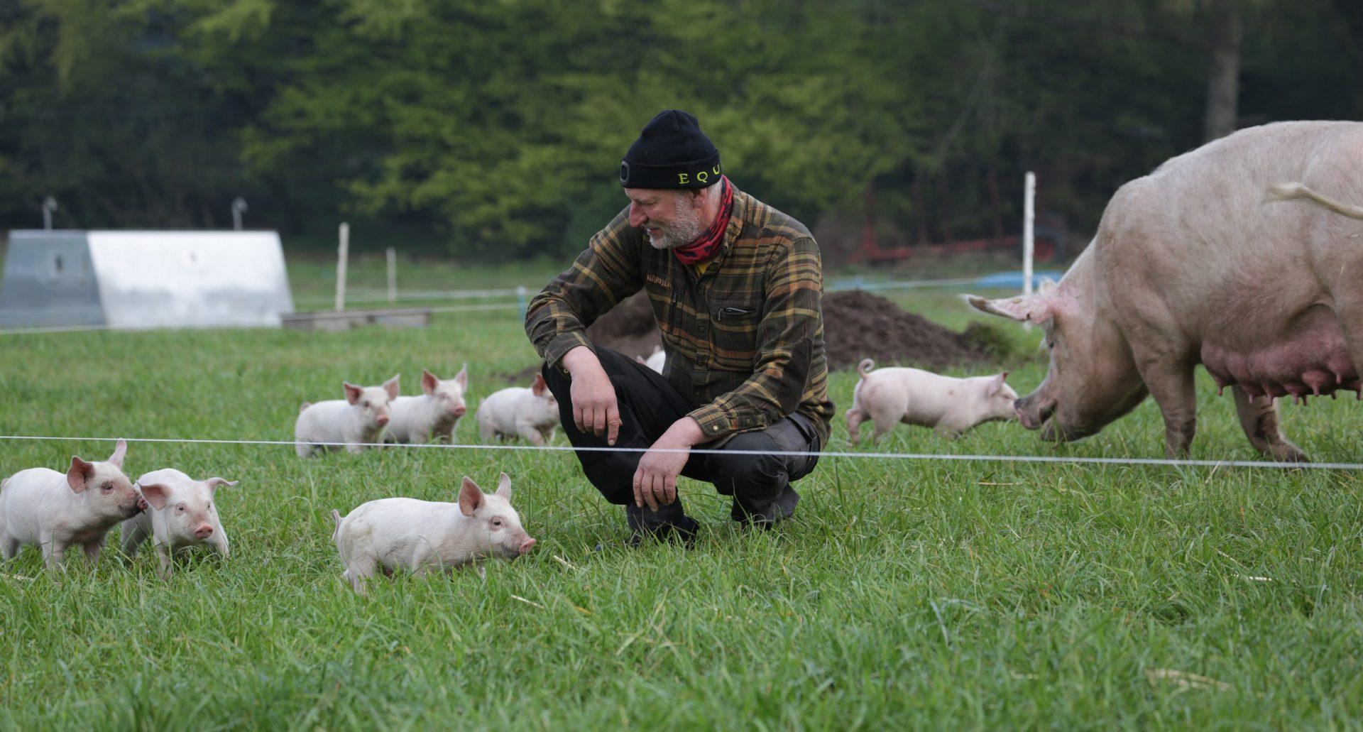 Verdensmester i økologi: Salget af økologi boomer – bare ikke for grisekød og fjerkræ