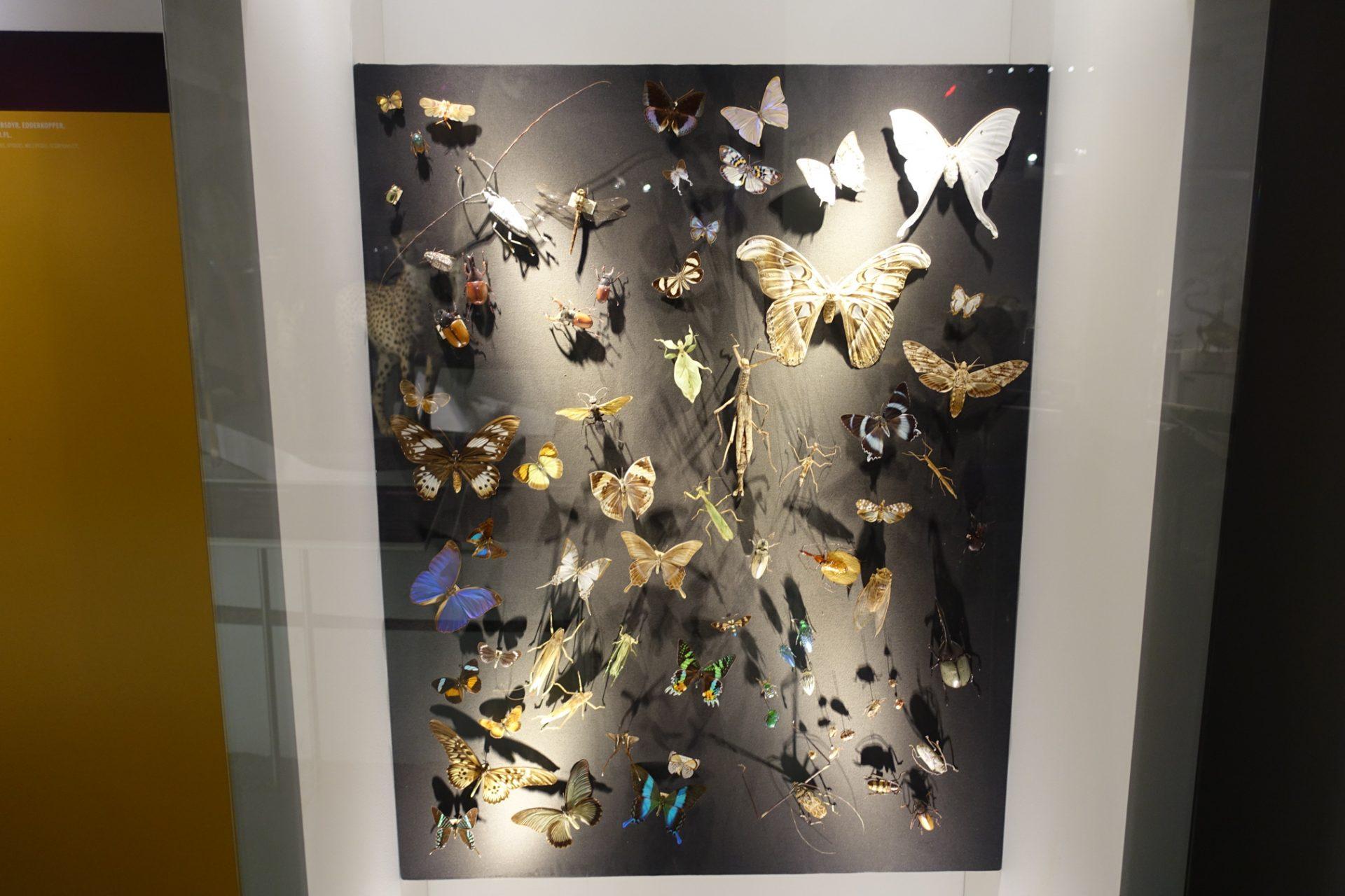 Reportage: Klimakamp og klare budskaber hos Naturhistorisk Museum Aarhus