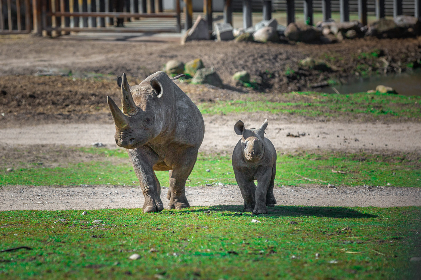 Sæsonåbning: Påsken står i dyreungernes tegn i Ree Park Safari