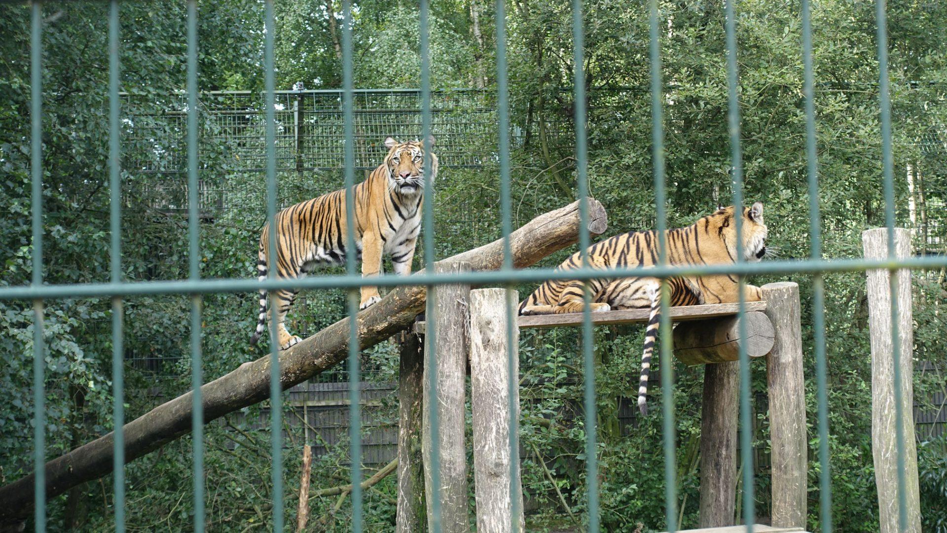 Reportage: Kampen for natur og rovdyr i Ree Park Safari på Djursland