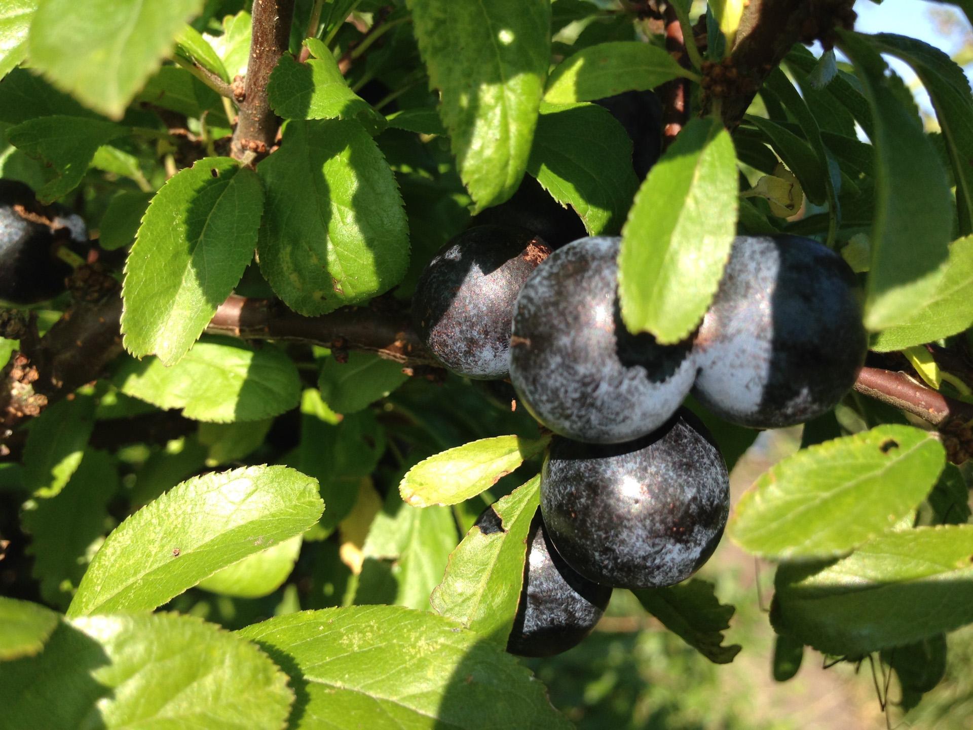Smag på Aarhus: Efteråret i Aarhus er spiseligt