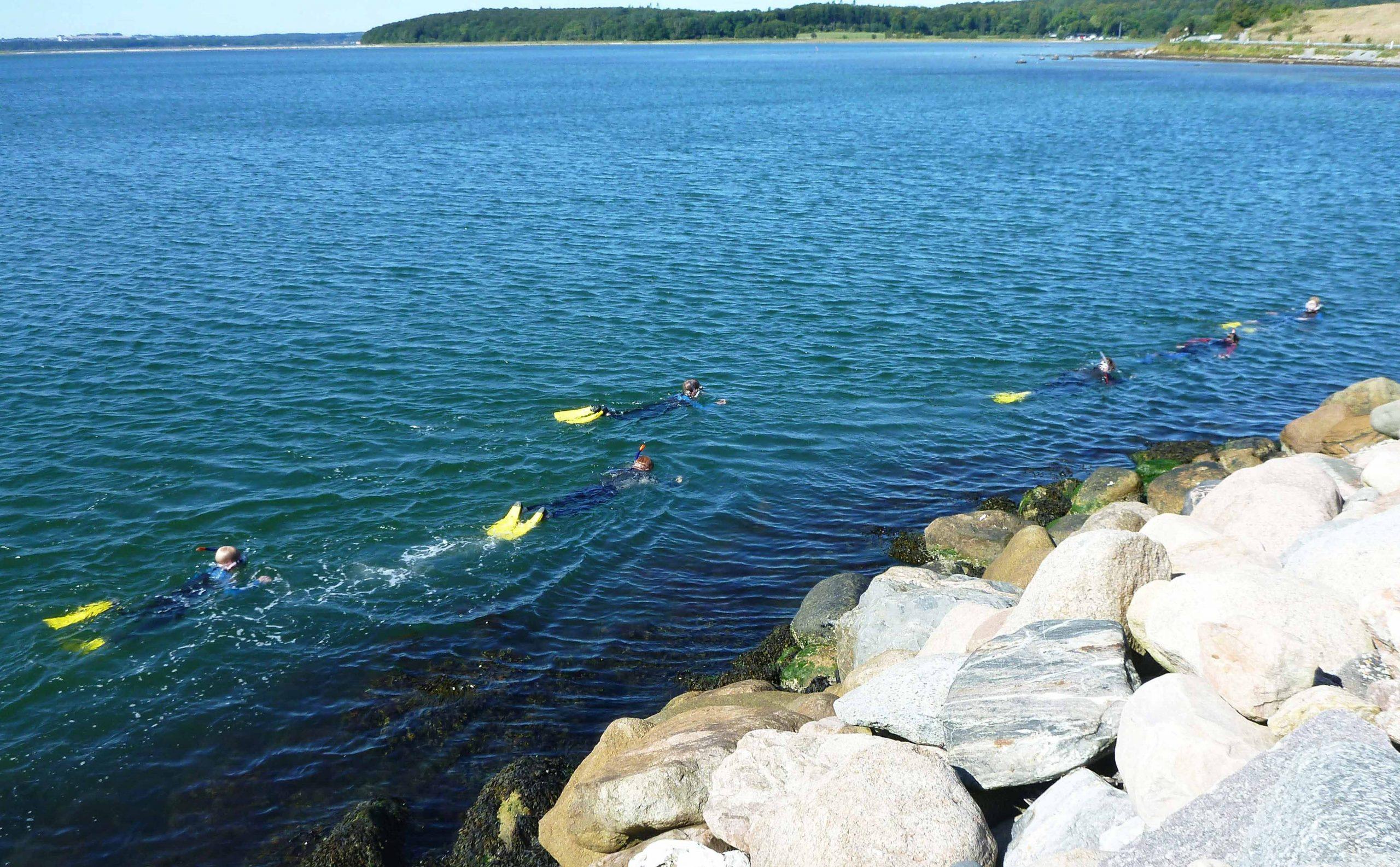 Boeslum Strand: Nationalpark Mols Bjerge tilbyder snorkelture til stenrev