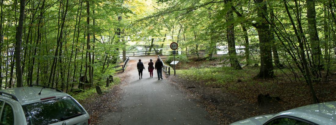 Vejen ned til Skovmøllen i Marselisborgskoven