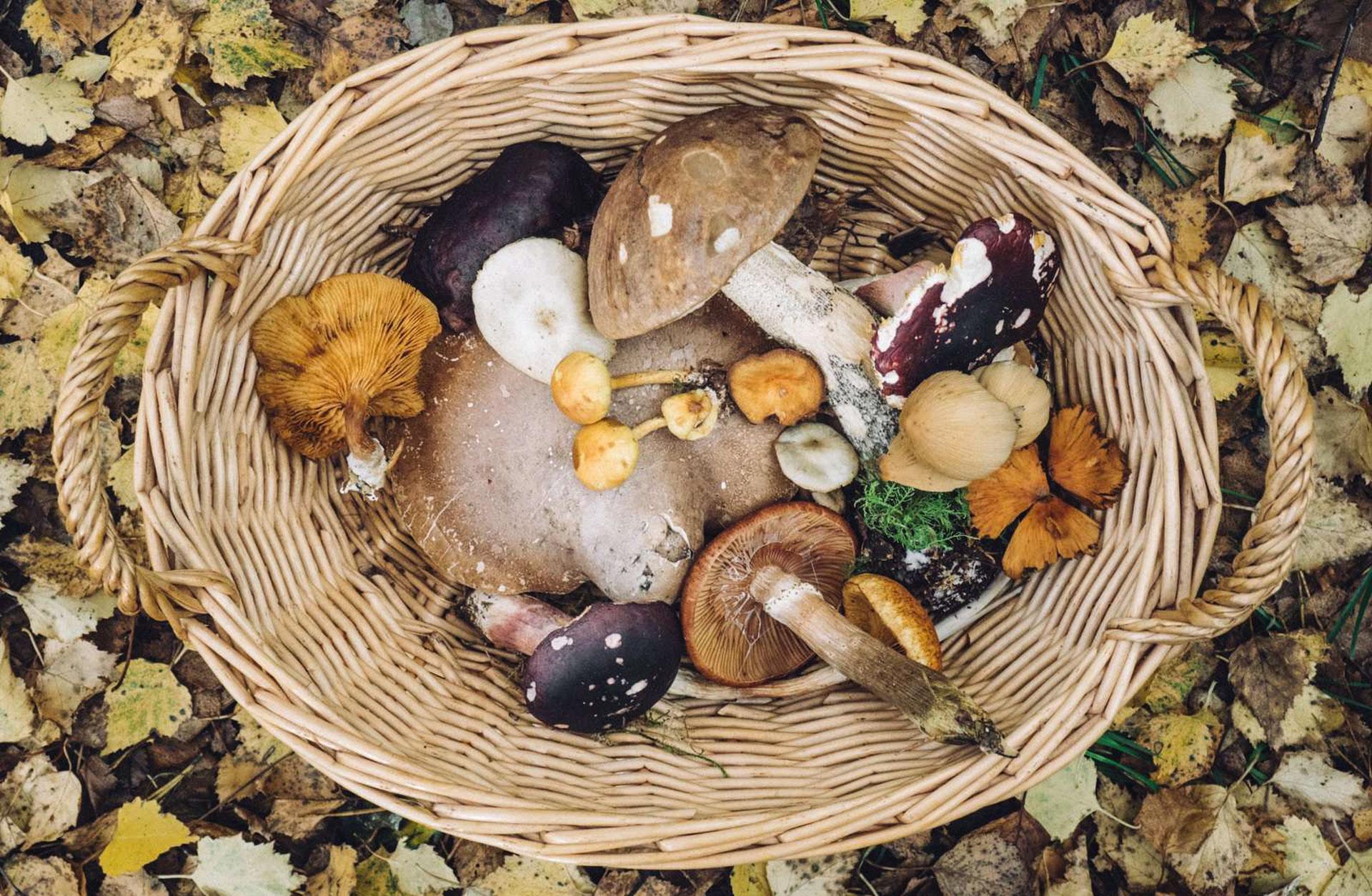 Det sker: Efterårsferien hos Aarhus Central Food Market er fyldt med oplevelser