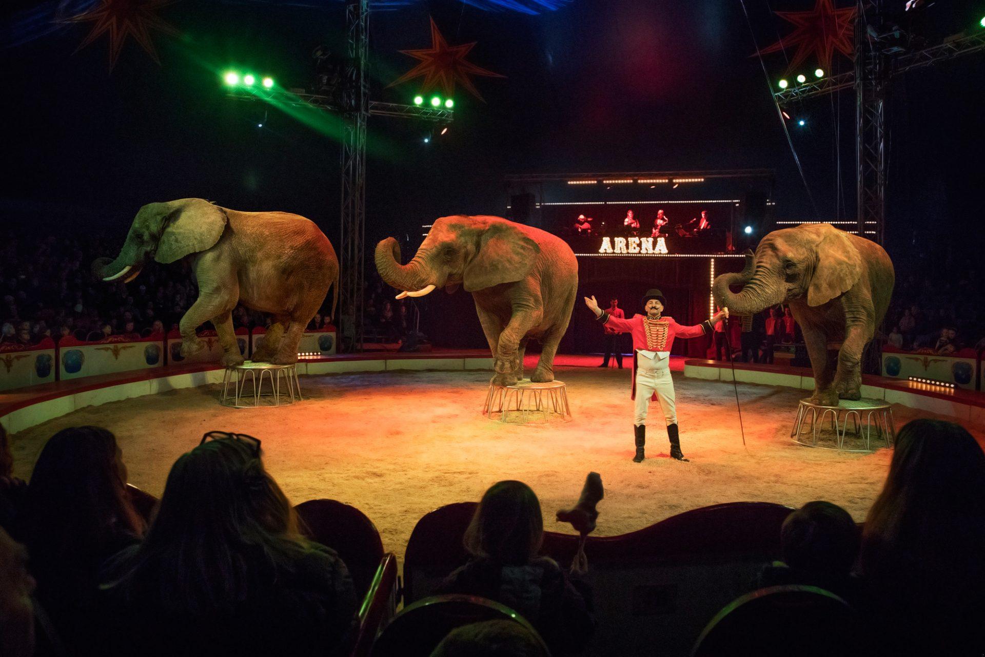 Cirkus Arena: Bubber laver sin egen cirkusforestilling i Aarhus