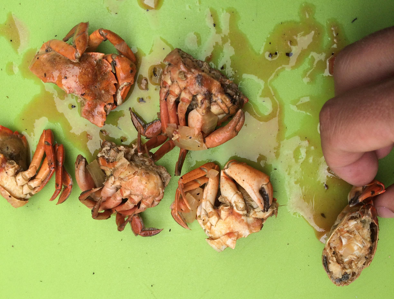 Smag på stranden: Hvad finder du af spiselige sager langs kysten ved Aarhus?
