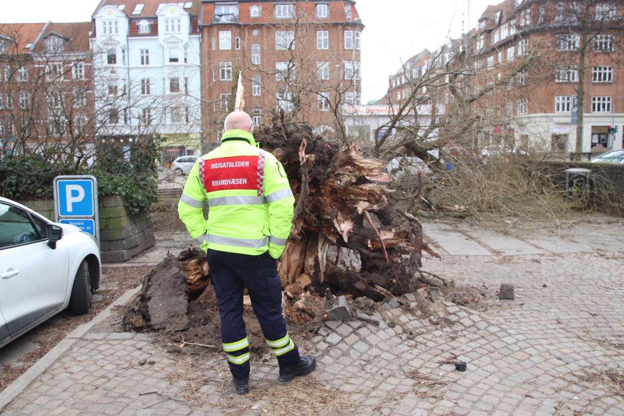 Mirakel ingen blev ramt: Kæmpe historisk træ midt i Aarhus væltede