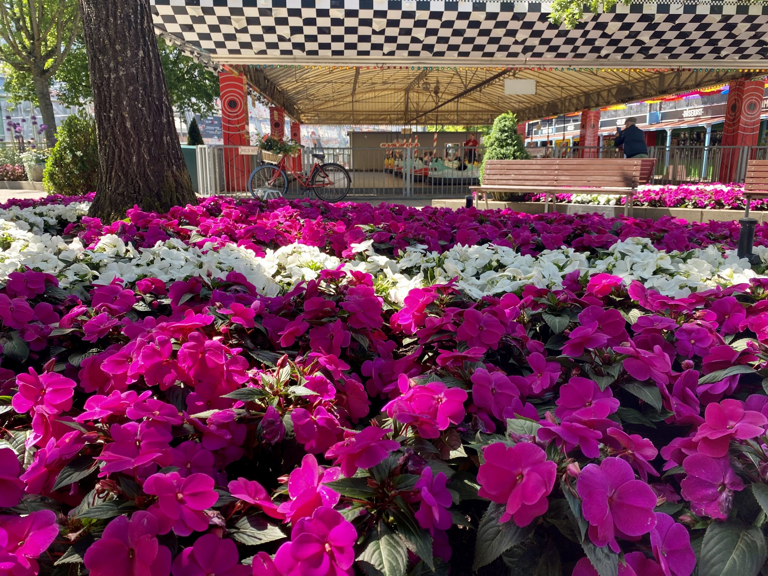 En sand farveeksplosion: Blomsterfestival i Tivoli Friheden
