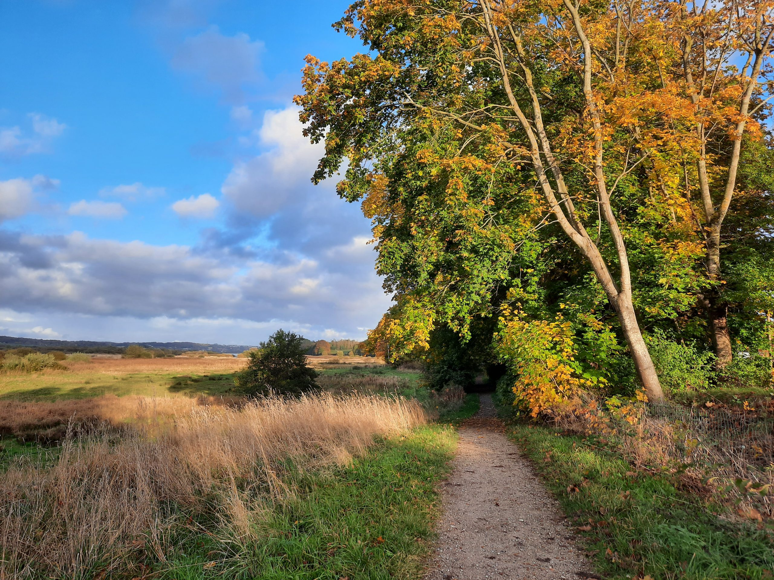 Smukke, grønne gåture: 7 bynære vandreruter i Aarhus for hele familien